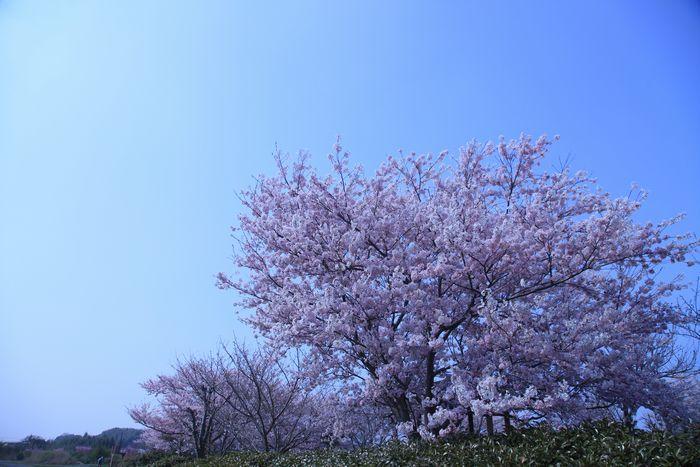 IMG_1151-0.jpg